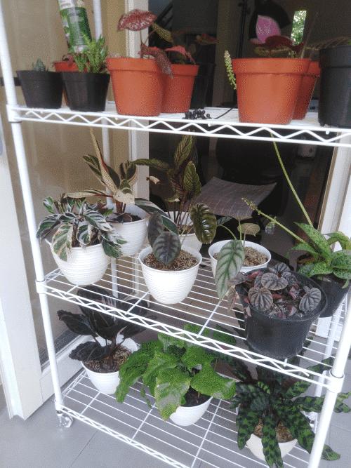 ジャカルタのアパートで観葉植物を育てるメリット