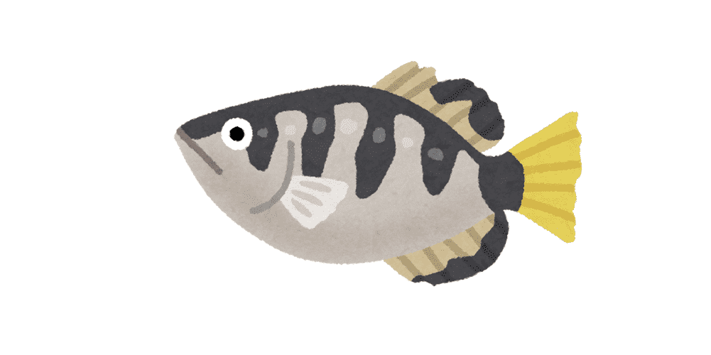 インドネシアで魚を飼育する