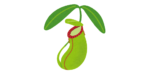 The Possibility of Online Houseplant Sales Business【Potential demand is high due to the urbanization of Indonesian life】