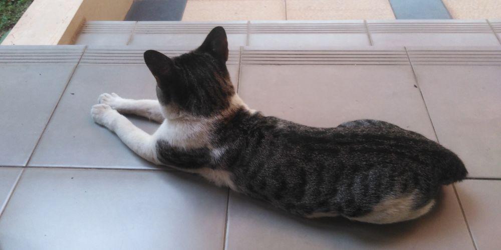 自宅前に勝手に住み着いている猫です。