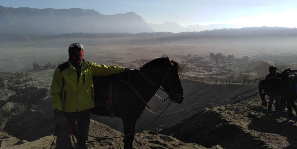ブロモ山の馬
